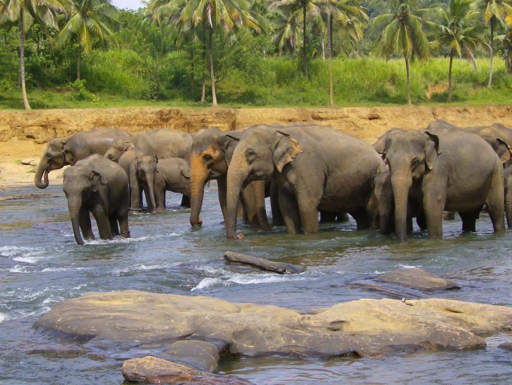 Class Game (Millicent Scott) Sri Lanka 2008