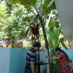Banana tree in the host family's garden